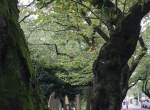 都立 谷中霊園